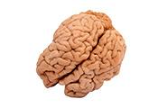 מוח עגל - קפוא