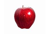 תפוח עץ חרמון - בראשית